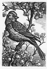 Wood block engraving 3 day workshop in July with Peter Brown, illustrator of ' The Feather Report'